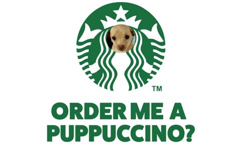 is a puppuccino for your you heard of the puppuccino fknhard