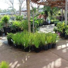Wooden Planter Boxes Melbourne by Plants Planter Boxes Melbourne Pots Galore
