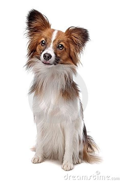 what causes uti in dogs causes of uti in dogs