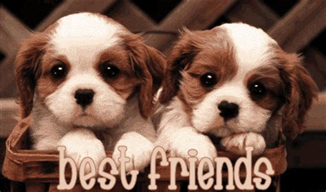 best friend puppies friendship is all i need to survive publish with glogster