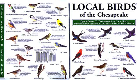 local birds quick guides to nature science