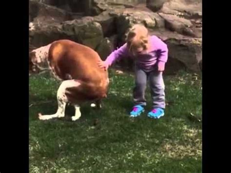 stopping dog from pooping in the house baby says great job pooping youtube