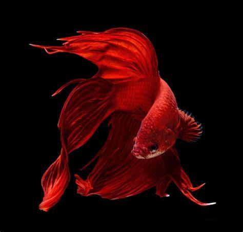 fotografia de peces fish ryba zwierzeta  akwarium