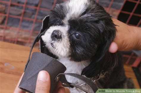 how to muzzle a how to muzzle a 12 steps with pictures wikihow