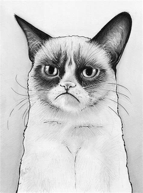 grumpy cat portrait drawing by olga shvartsur