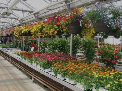 Greenhouse Garden Center by Garden Center Wholesale Plants Wagners Greenhouses