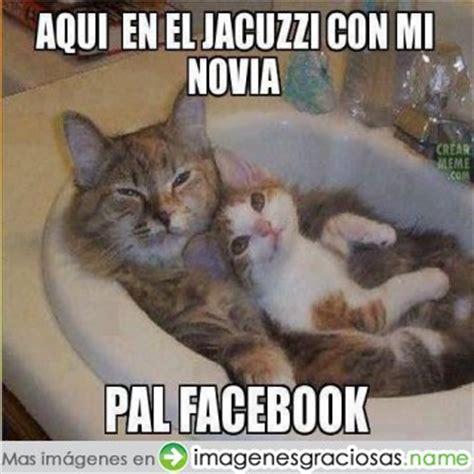 imagenes chistosas gatos fotos de gatos facebook imagenes chistosas imagenes
