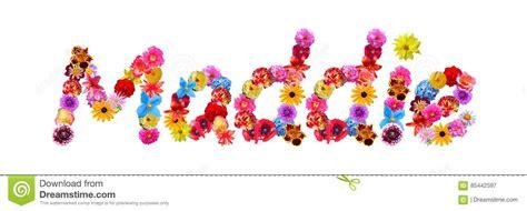 flowers  maddie stock illustration illustration