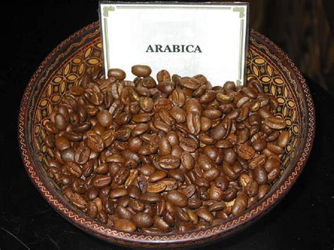 Coffindo Single Origin Arabica Sumatera Roasted Bean arabica vs robusta coffee beans guide 2 coffee