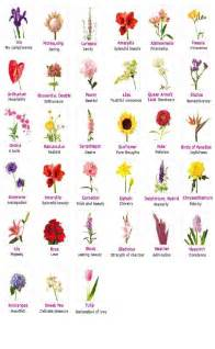 Types Meaning by Flower Types And Their Meanings Trusper