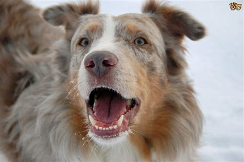 5 types of dogs recognising different types of aggression in dogs pets4homes