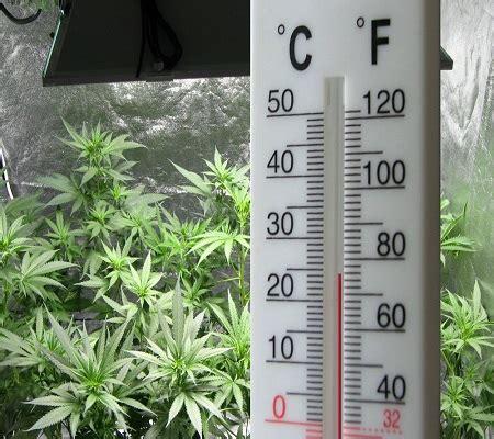 Cannabis Grow Room Temperature by Humidity And Your Marijuana Plants Grasscity Magazine