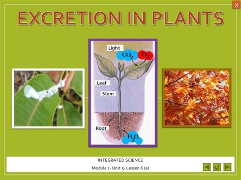 Excretion In Plants Diagram integrated science m2 excretion in plants