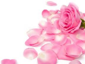 Pretty pink roses wallpaper pink color photo 34590774 fanpop