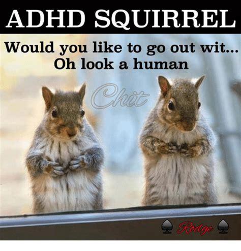 Adhd Squirrel Meme 25 best memes about adhd squirrel adhd squirrel memes