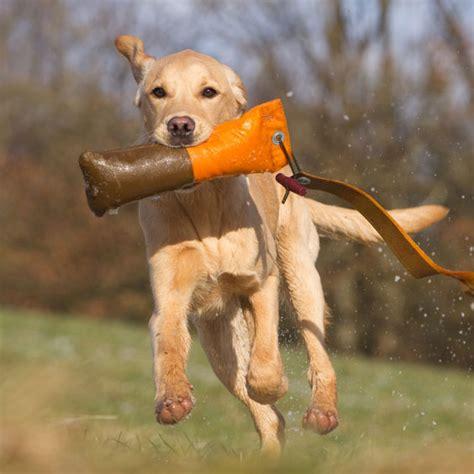 was bringen liegestütze suchen finden bringen hundeschule bei steyr