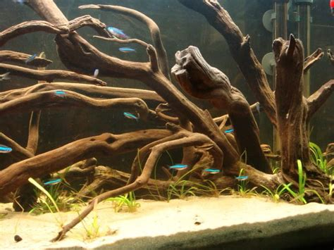 american aquascapes pin by taylor lasley on south american biotope tank