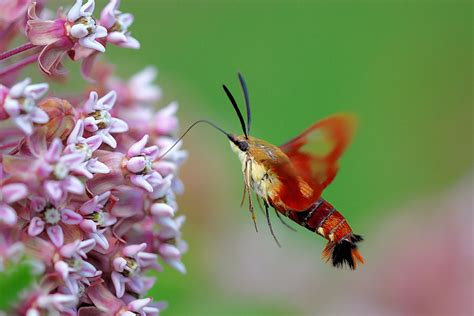 flying insect pictures http wiseacre gardens com