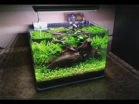 nano planted tank light 3 gallon nano planted tank day 75