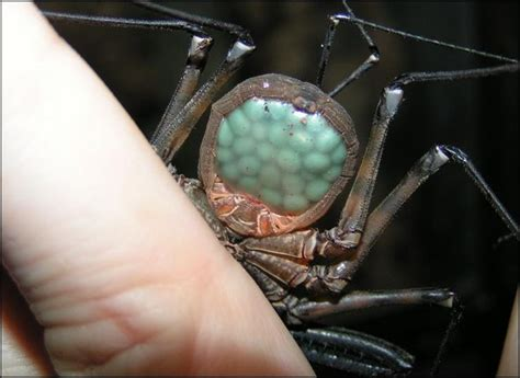 whip scorpion gif google search spider bites spider