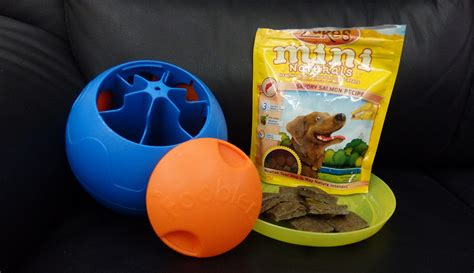 best puppy toys to keep them busy the best puzzle toys to keep your busy tully s