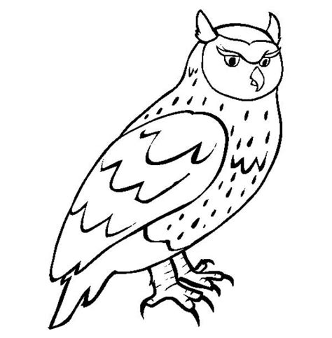 great horned owl habitat coloring page coloring pages