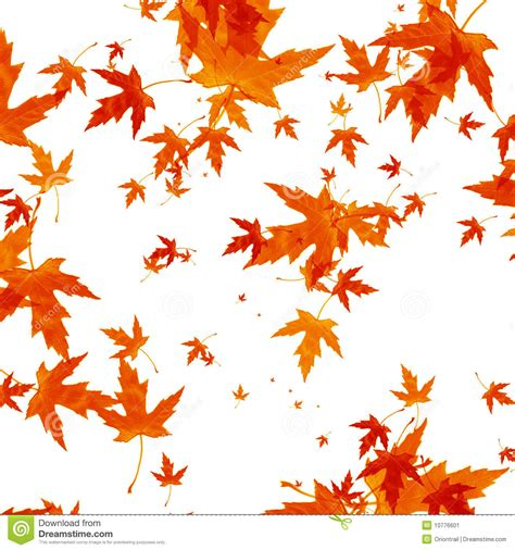 Fall Leaves On White Background Falling Autumn Leaves On White Background Stock Image Fall Leaves On White Background