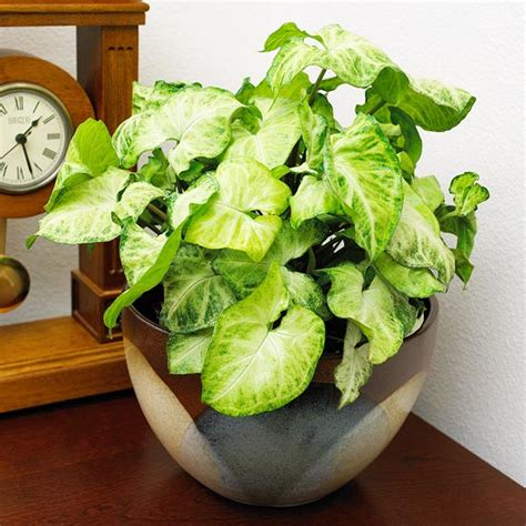 easy indoor plants home sweet home easy to grow house plants
