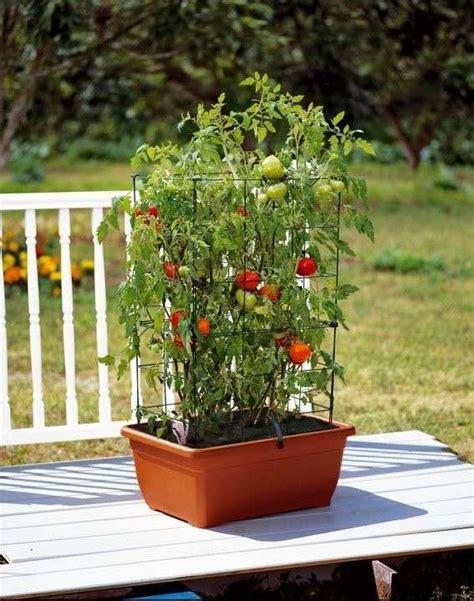 que plantar en casa huerto casero qu 233 plantar en casa huerto casero