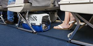 United Airlines In Cabin Pet Policy by Traveling With Pets United Airlines