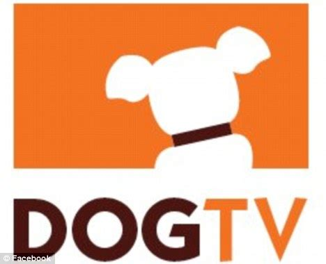 can dogs tv can dogs tv positivemed