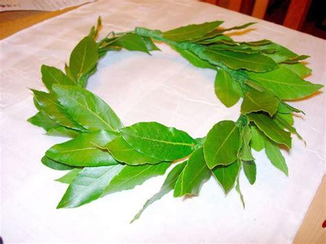 pianta di alloro in vaso alloro pianta piante da giardino pianta di alloro