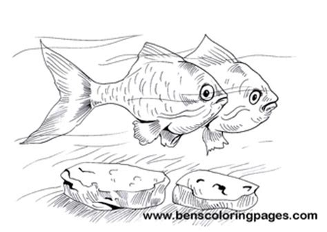 coloring pages of tiger fish tiger fish coloring coloring pages