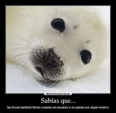 imagenes de focas blancas im 225 genes y carteles de foca pag 23 desmotivaciones