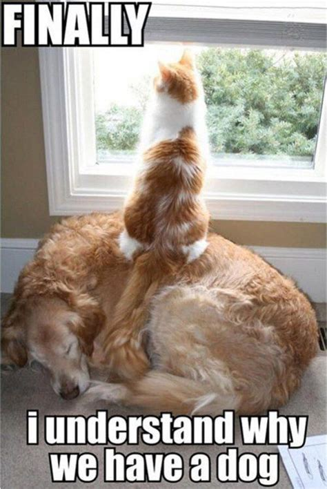 Funny Dog And Cat Memes - best 50 funny cat vs dog memes images to prove who s boss