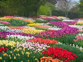 Photo Of Flowers Garden Why You Re Sneezing The Most Beautiful Flowers In Bloom This Photos Cond 233 Nast Traveler