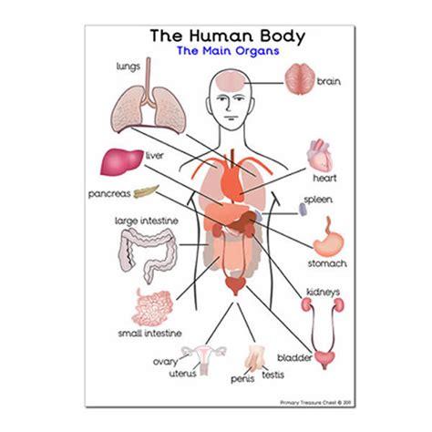 human body sections human internal body parts info