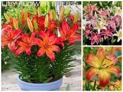 outdoor plants that don t need sunlight outdoor plants that don t need sunlight 100 plants that