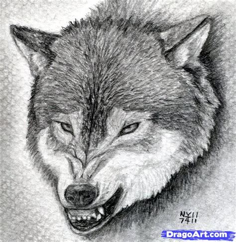 Ready Senin Animal learn how to draw a growling wolf realistic drawing