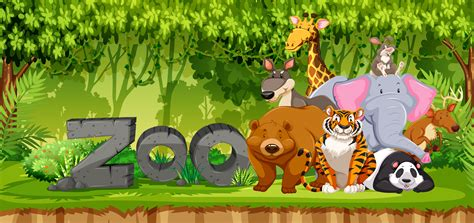 set  zoo animals  jungle   vectors