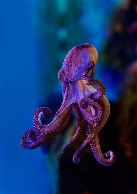 colorful octopus 25 best ideas about octopus on octopus decor