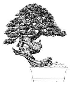 libro bonsai the art of bonsai tree artwork out of asheville nc the perfect gift