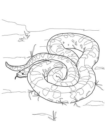 Green Anaconda coloring page | SuperColoring.com