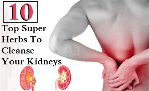 Herbs To Detox Your Kidneys by 10 Top Herbs To Cleanse Your Kidneys Care Health