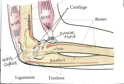 bone joint diagram bones joints labelled diagram of a human