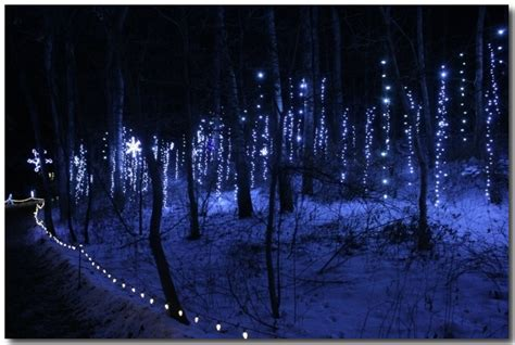 forest christmas lights christmas decore