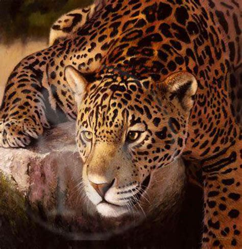 jaguar pictures to print jaguar limited edition print by pip mcgarry