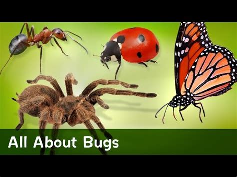 Pull Up Motif Bugs all about bugs
