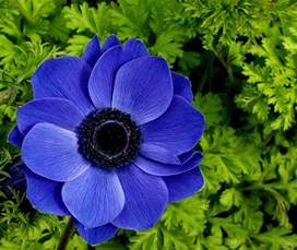 Beautiful Plants The 10 Most Beautiful Flowers In The World The Top Ten List