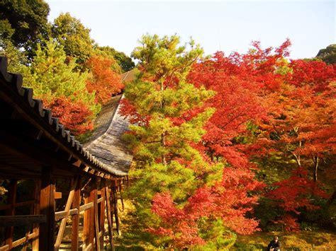 Co Search 京都 高台寺の紅葉について調べてみた件2015 ライトアップ